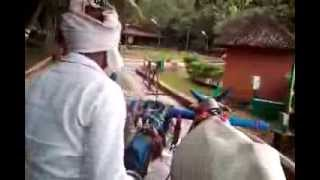 Ox cart ride in Shilparamam (2)