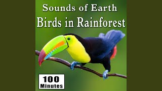 Bright Rainforest Bird Song with Insects (Rain Forest Ambience Sound Effects)