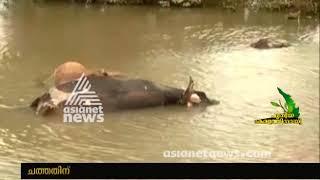 5100 Cows died in Flood   Kerala Flood 2018