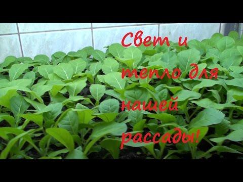 Рассада. Свет и тепло важные факторы развития растений!