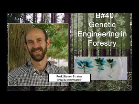 Talking Biotech 040 -- Genetic Engineering in Forestry