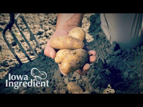 Potatoes | Iowa Ingredient
