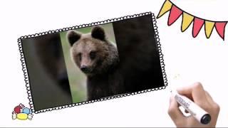 Моя презентация про животных