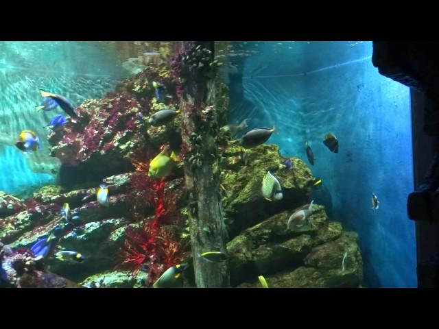Рибки плуват в Банкок