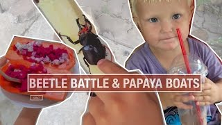 Beetle Battle & Papaya Boats