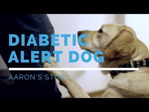 diabetic-alert-dog-feature:-aaron's-story