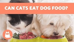 Can Cats EAT DOG FOOD? 🙀