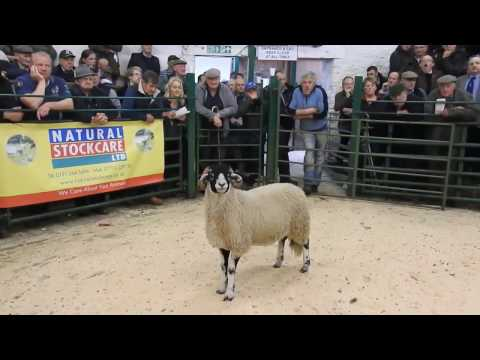 WE BOUGHT A TUP!! kirkby tup lamb sales 2016