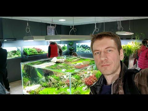 Green Aqua Новая студия природных аквариумов в Будапеште