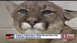Mountain lion hunting may resume in 2019