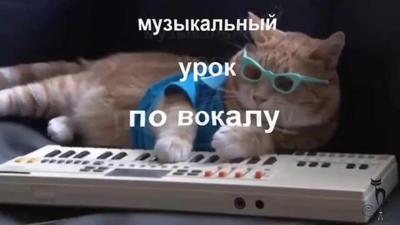 Видео приколы с котами под музыку