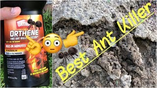 ✅Best Ant Killer | 🐜Orthene by Ortho Get Rid of Ants, Ant Queen & Mounds in Minutes Quick Review