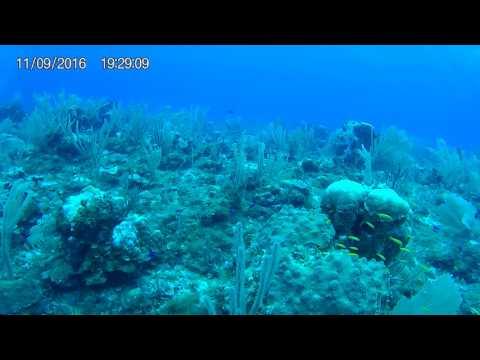 grand palladium riviera maya, mexico. full scuba dive