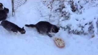 Коты на даче! Зима 2012!