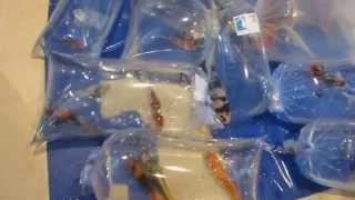 Koi Fish for Sell ● 11th All Indonesia Young Koi Show