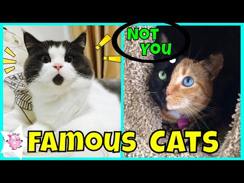The Most Famous Cats On The Internet