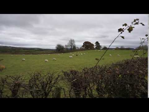 Bedstone - sheep
