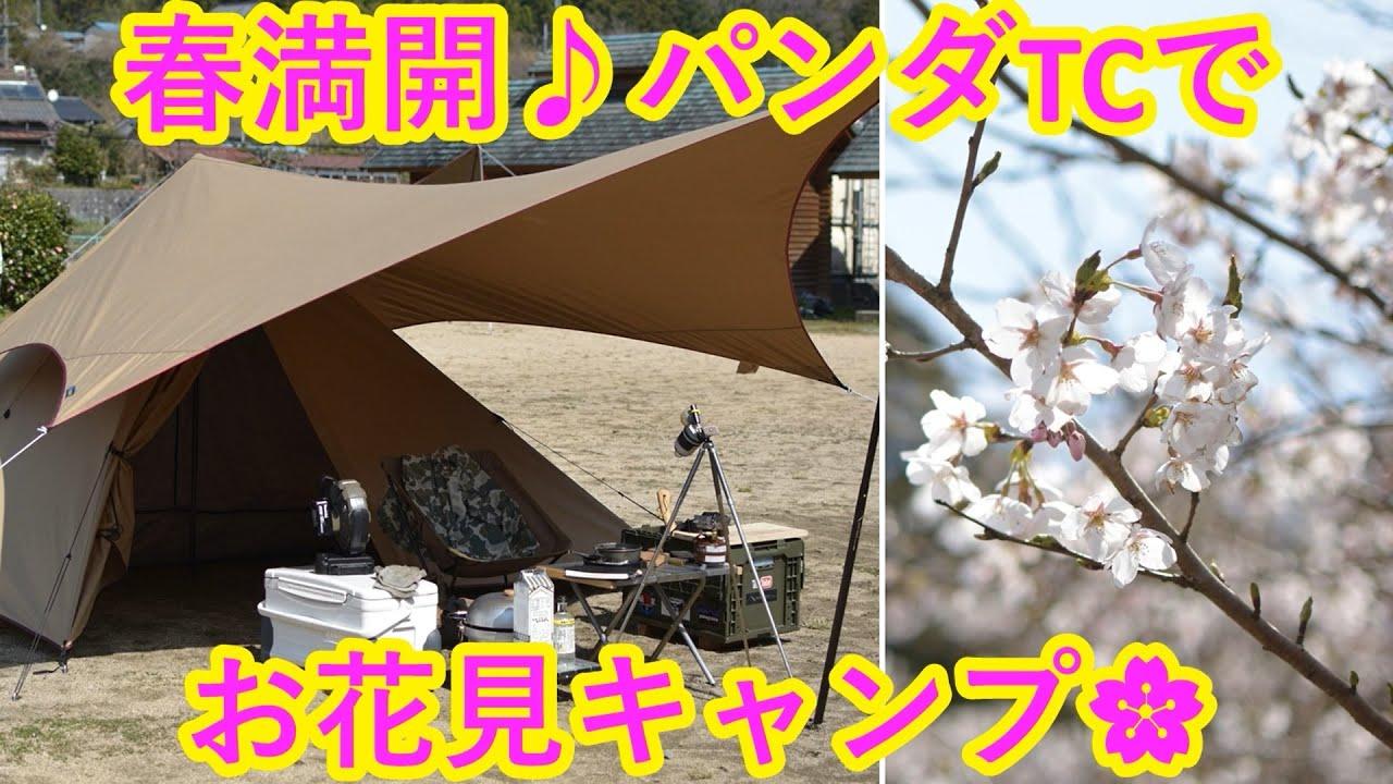春満開♪パンダTCでお花見キャンプ🌸