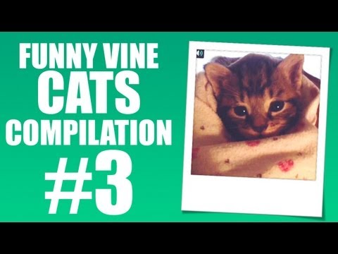 Baby cat with hiccups – Funny Vine Cats #3