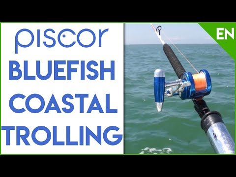 Bluefish Trolling Fishing Session