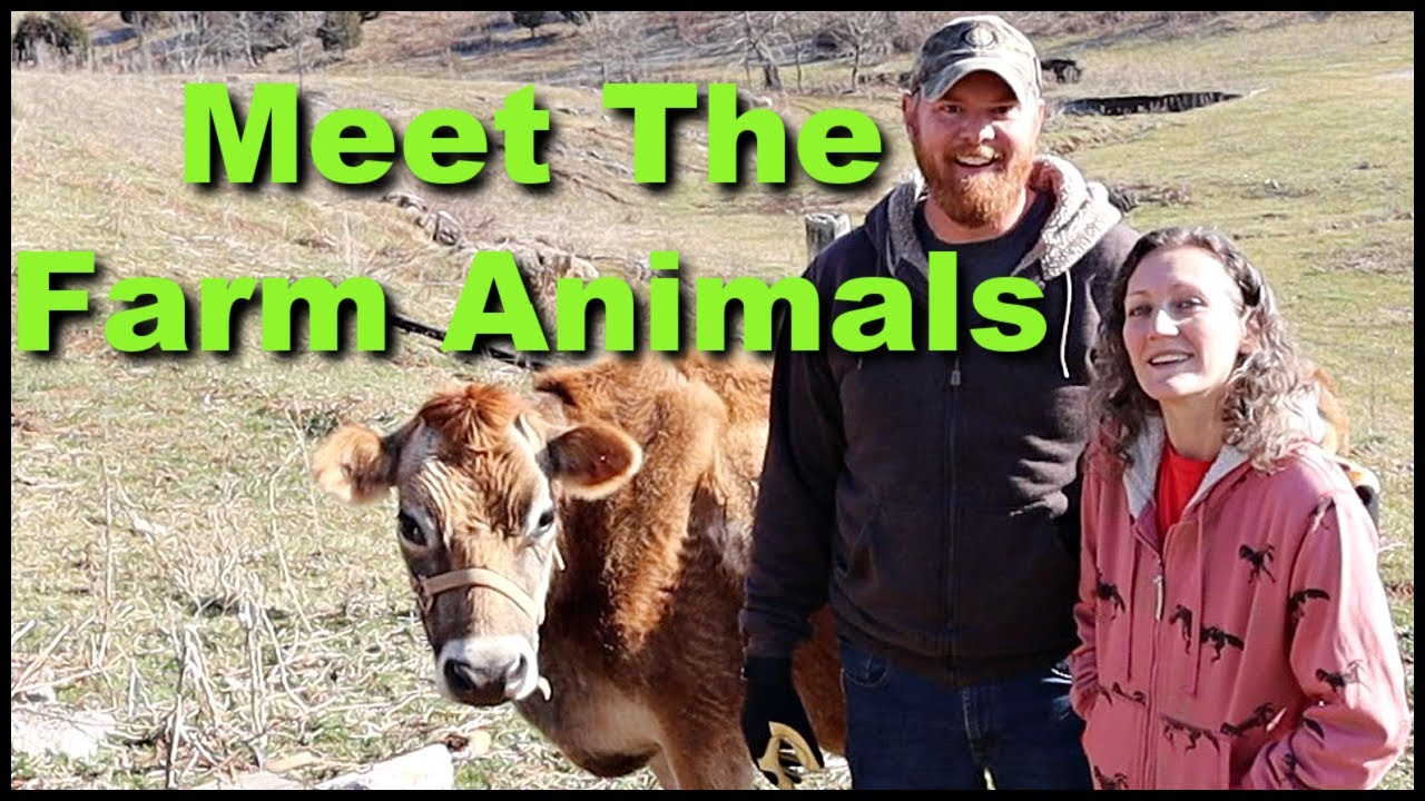 Meet The Farm Animals