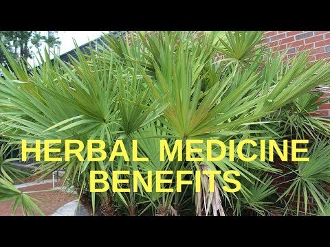Herbal Medicine Benefits & the Top Medicinal Herbs More Peop