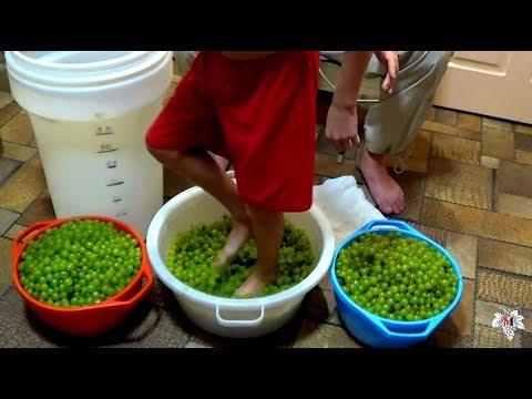 Приготовление сухого вина в домашних условиях. Часть 1. Виноград 2016.