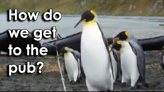 Ozzy Man Reviews: Penguins vs Rope