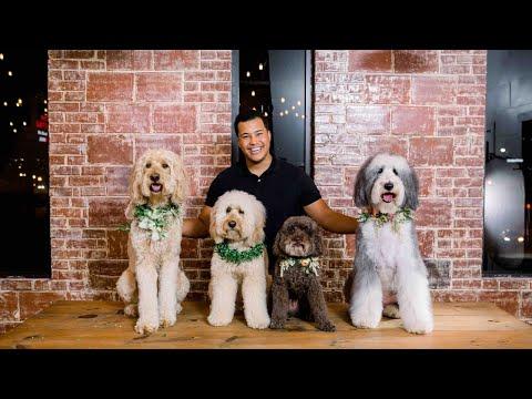 Mayesh Design Star: Floral Dog Collar Tutorial thumbnail