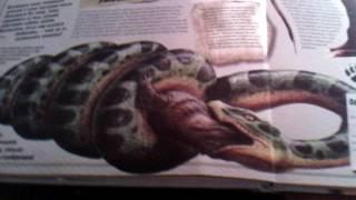 Обзор моей книги о животных и моего светильника