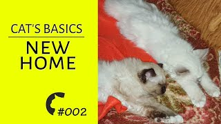 Cat's in new home | Cats care | Basic stuff | Cat's diary