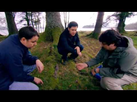 Edible Wild Mushrooms Found In Scotland