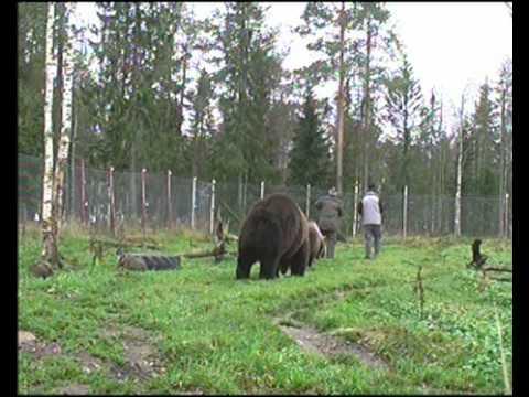 Ystävyyttä karhujen kanssa traileri.avi