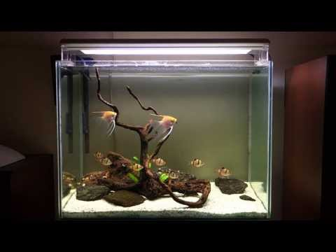 hardscape for angels with tiger barbs