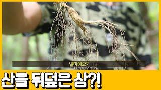 [선공개] 50억, 값비싼 삼이 온 산을 뒤덮었다! 갑…