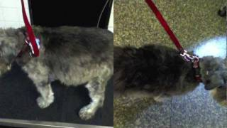 Fat Dog Loses 7 Pounds In An Hour! Nikki Moustaki Knows Pets, Ozzie Gets Drained
