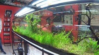 Los mejores acuarios  plantados mercado de peces  Morelos  (Mario Blogs)