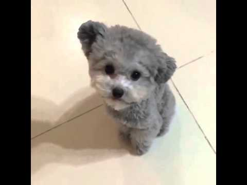 Your Daily Dose of Cuteness