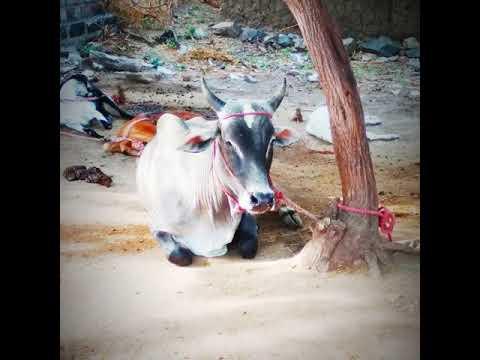 Dyar wars gowtham Ajith