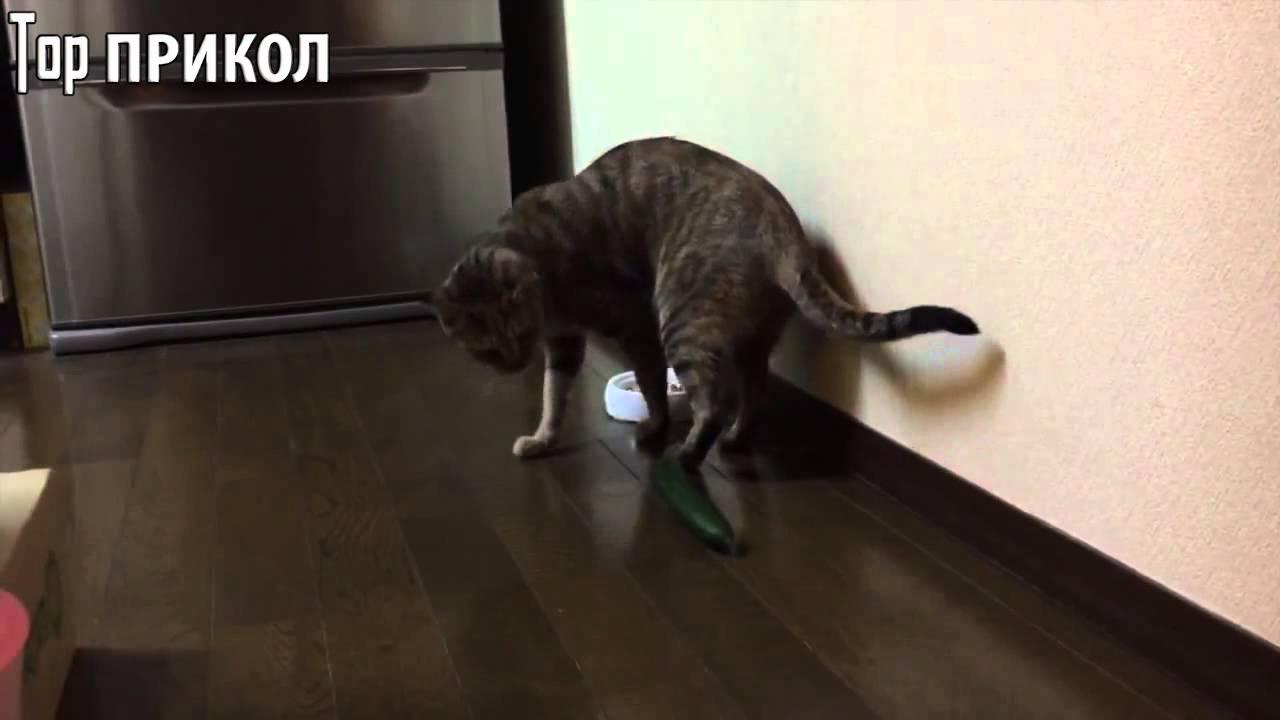 Коты и о огурцы видео ютуб