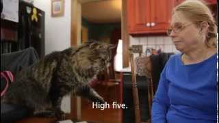 Sign Language with Cats