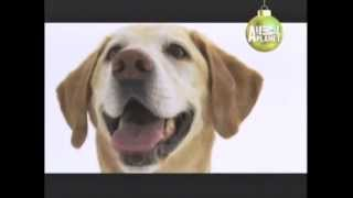 Labrador Retriever - Abc Canino - 101 Dogs - EspaÑol