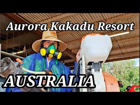 kakadu-national-park,-aurora-kakadu-resort.-adventure-with-bernie,-all-in-a-days-work.