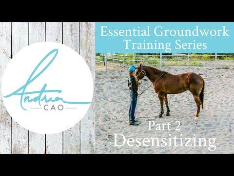 How To Desensitize And De-Spook A Horse - Essential Groundwork Part 2