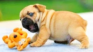 Animals Doing Things 😍 Funny Cat and Dog Videos Compilation 2018 #6