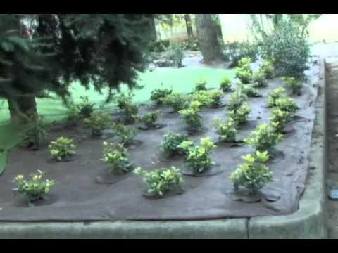 Pacciamatura hoasi barbiflex youtube - Telo tessuto non tessuto giardino ...