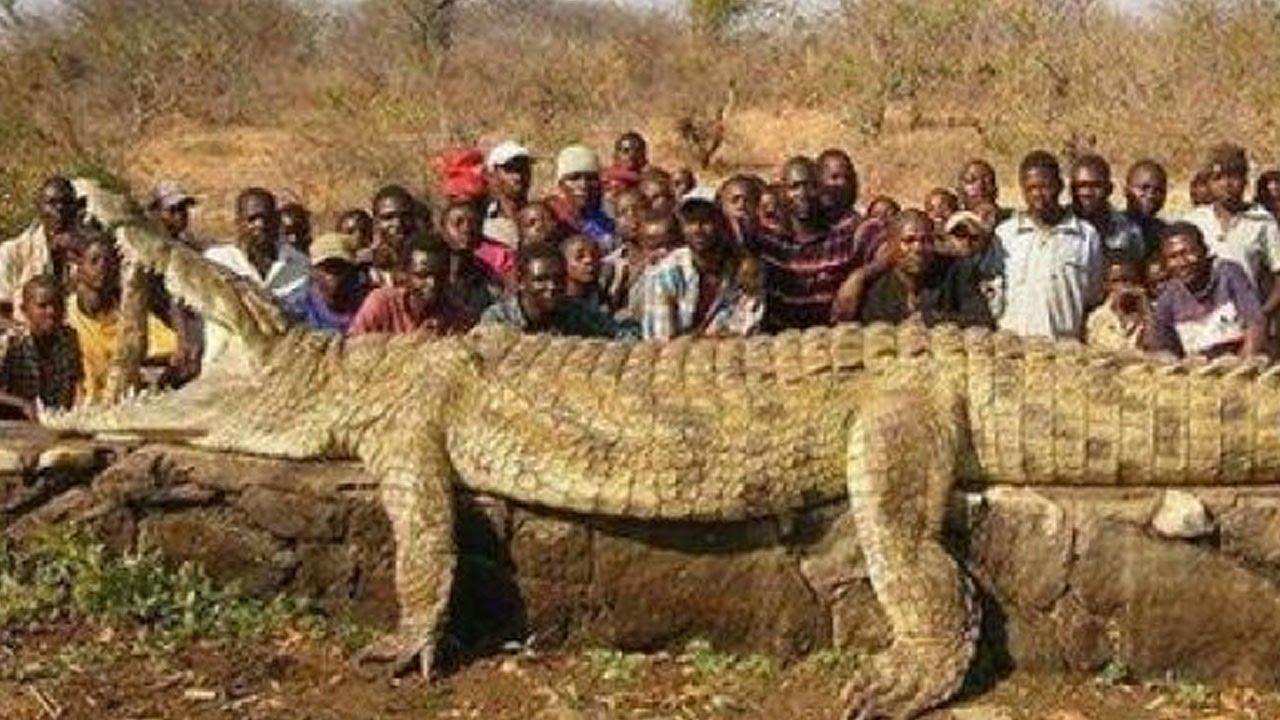 Aninimal Book: WORLD'S BIGGEST CROCODILE? - YouTube