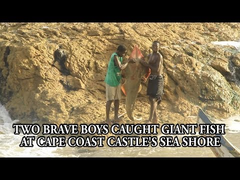 TWO BRAVE BOYS CAUGHT GIANT FISH AT CAPE COAST CASTLE'S SEA SHORE TO AMAZE THE PEOPLE   source AKAN
