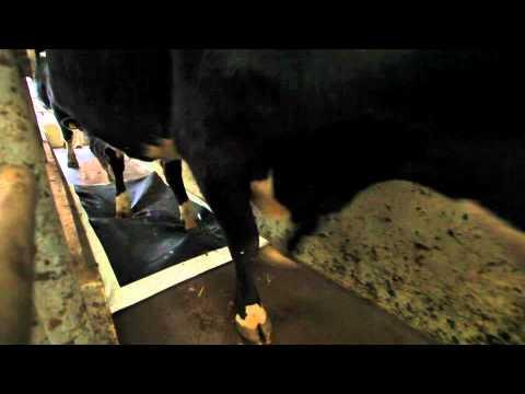 Mammoet Dosing Mat People, Desinfection Mat People