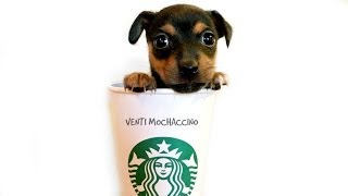 Starbucks Venti Mochaccino